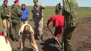В Поныровском районе школьники высадили 500 сибирских кедров