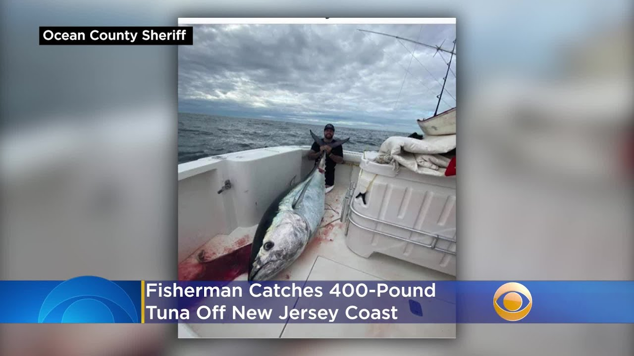 Fisherman Catches 400 Pound Tuna Off