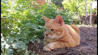 Relaxing Cat Video 14