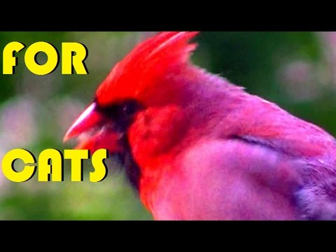 Amazing BIRDS of MINNESOTA NATURE IN HD