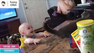 Самые смешные коты и кошки. Funny Video 05/2020