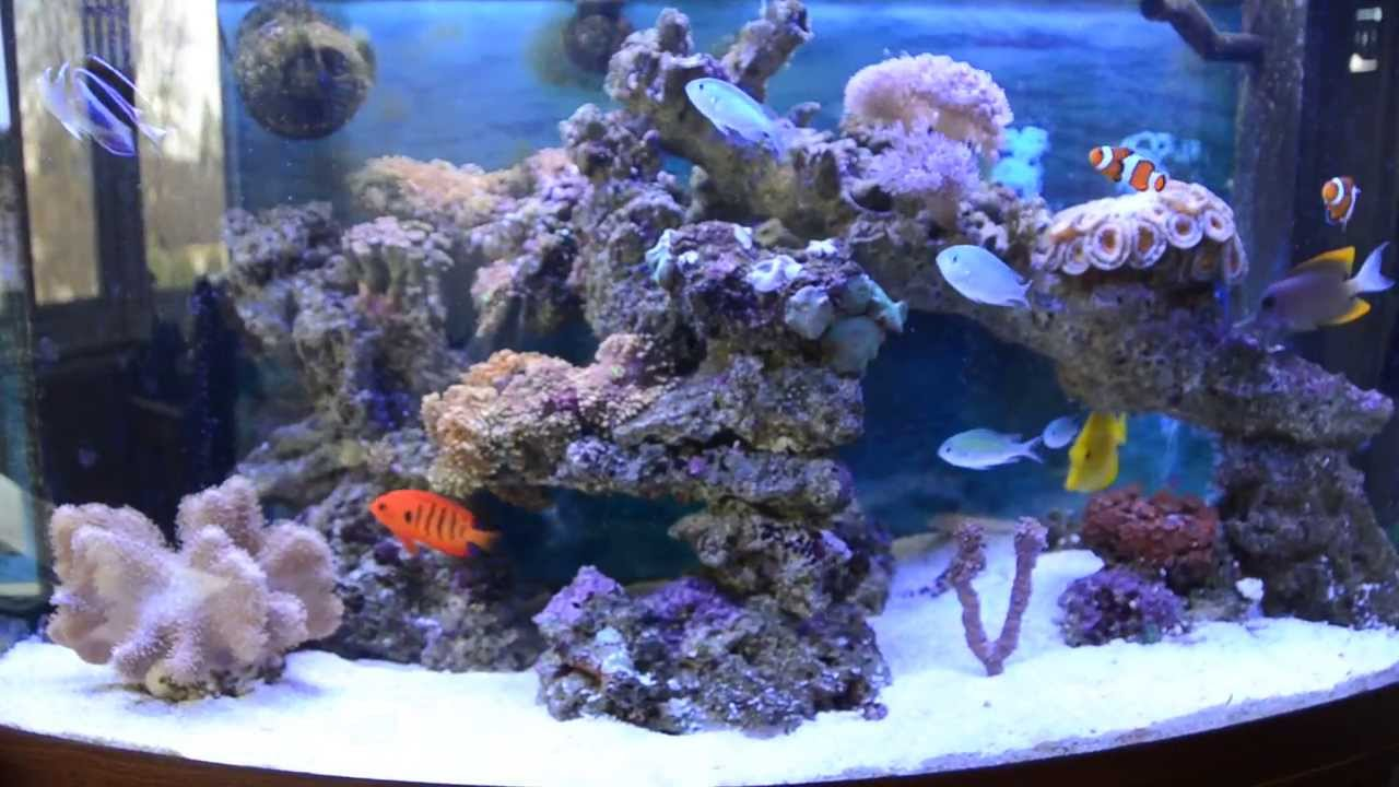 40 gallon 180 litre marine aquarium youtube. Black Bedroom Furniture Sets. Home Design Ideas