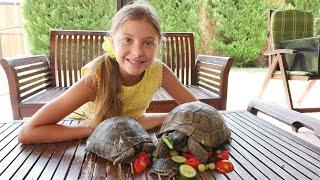 Черепаха Челленж! Лучшая подружка Полен и животные для детей. Домашняя черепаха и ее потомство.