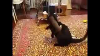 Наши любимые животные!!!!! Смешно!!!!!!!!!!