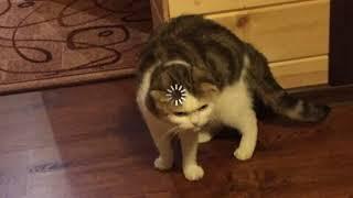 Включи Эти Звуки Своему Коту И Смотри На его Реакцию