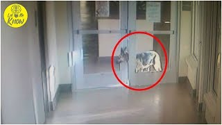 This Shelter Dog Was So Desperate To See Her Old Family, She Pulled Off The Greatest Escape