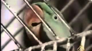 Parrot Reciting Quran