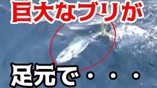 屋久島の巨大ブリを堤防から狙う!!