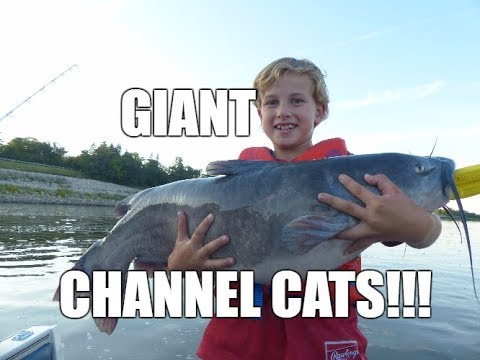 Lockport Selkirk Manitoba's Giant Channel Cats 2017