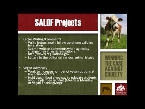 SALDF Chapter Resources and Opportunities