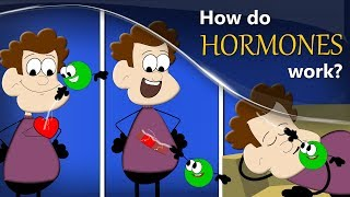 How do Hormones work? | #aumsum