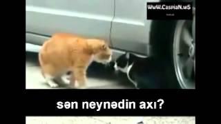 Xeyanet eden pisik ve esl sevgilisi (Maraqli video)