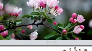 苹果花 by The Stylers (Ver.  2)