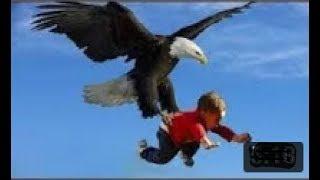 Eagle vs (wilk, człowiek, wąż, inne zwierzęta) Najbardziej niesamowite manewry orłów