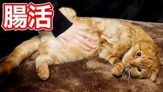 猫の便秘を解消する2つの方法がこちら!