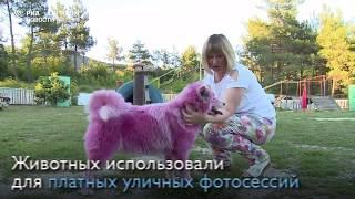 В лесу под Геленджиком волонтеры спасли розовых собак
