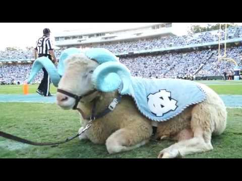 A Day In The Life | Rameses The Carolina Mascot
