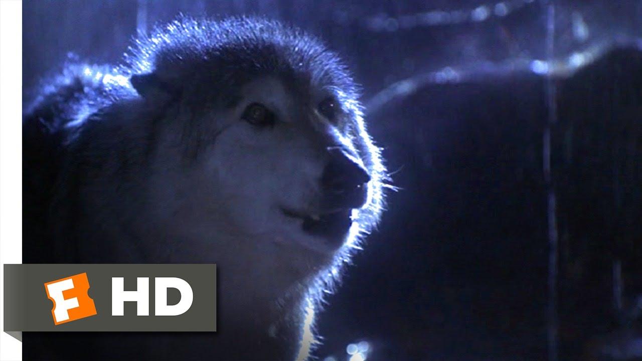 Lassie (3/9) Movie CLIP - Lassie vs. Wolf (1994) HD
