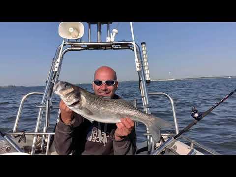Hill Head Bass Blackbream And Smoothound Fishing Southcoast Southampton United Kingdom