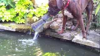 Dog & Fish good friends