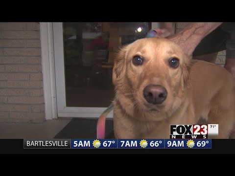 Tulsa golden retriever helps stop burglary suspect