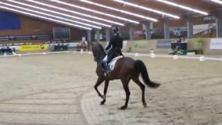CDI Wiener Neustadt/AUT, Catch you Grand Prix Kür