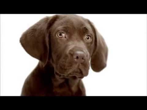 Jotun Boya Dünyanın En Güzel Renkleri Yavru Köpek Youtube