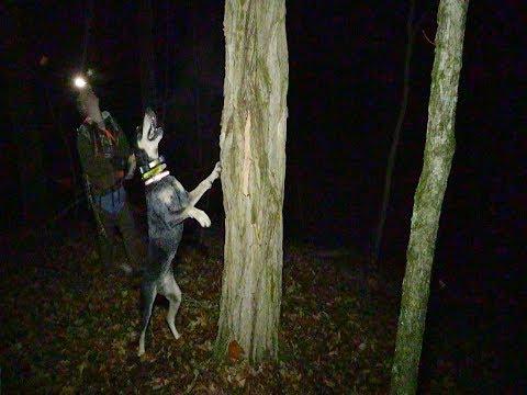 Racoon Hunt in Owen County, Kentucky