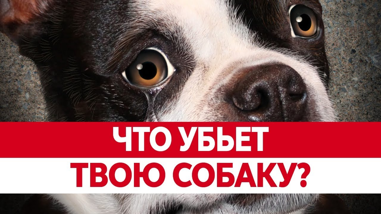 чем кормить собаку при аллергии отзывы врачей