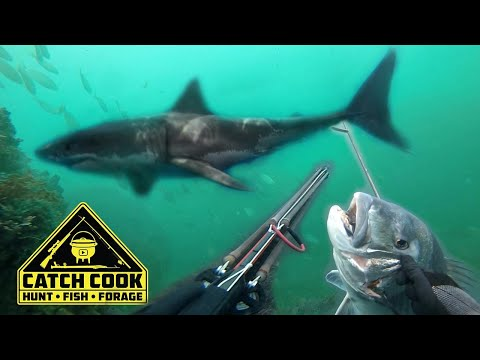Monster Great White Shark steals my dinner! [Catch Cook]