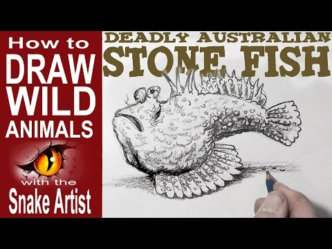How To Draw The Deady Australian Stone Fish (Beginner To Intermediate)
