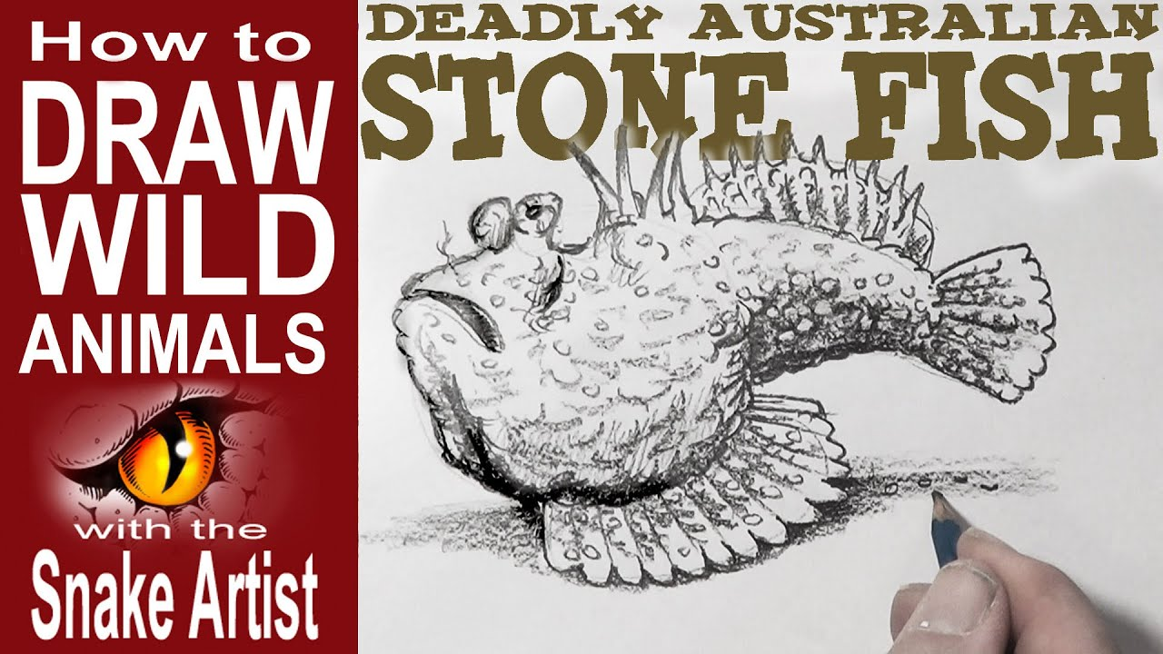 How to draw the deady australian stone fish beginner to for How to fish