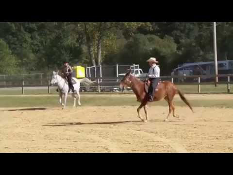 WV Mule and Donkey Show Gaited Class