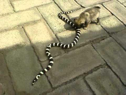 Resultado de imagen para perros vs serpientes