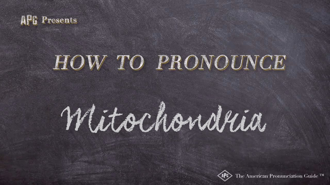 How to Pronounce Mitochondria  Mitochondria Pronunciation