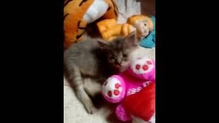 Котята в добрые руки:)