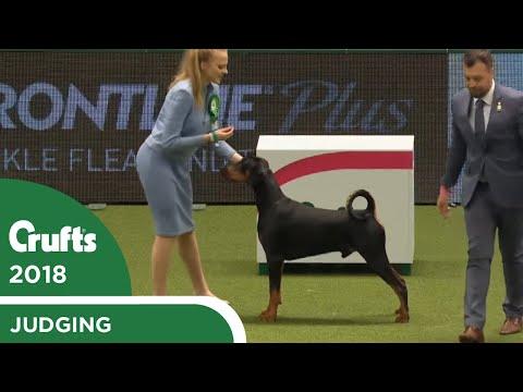 International Junior Handling Competition (First Round) Part 3 | Crufts 2018