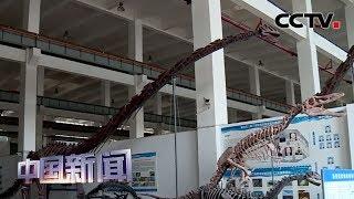 [中国新闻] 重庆云阳恐龙动物群发现一恐龙新种 | CCTV中文国际