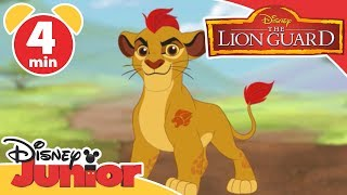 The Lion Guard | Learning Animals 🦁 | Disney Junior UK