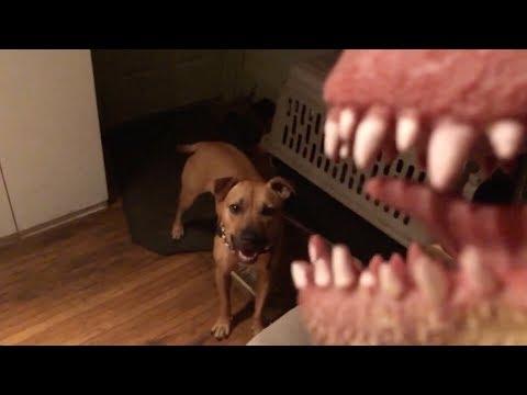 PIT BULL DOG & CAT VS. DINOSAUR PUPPET!