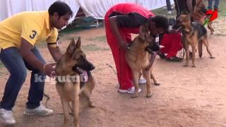 German Shepherd Dog Show