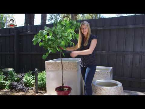 Planting Tips For Big Pots