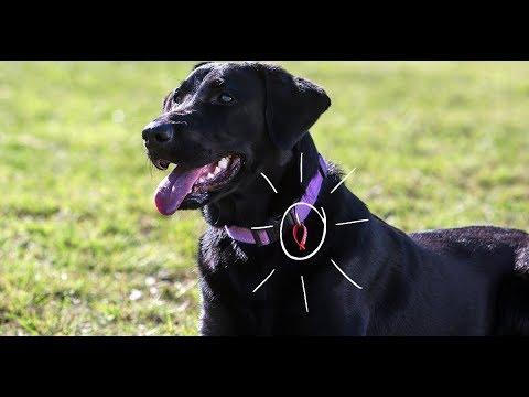 Register Your Dog
