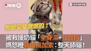 被救援奶貓「全身濕+狂發抖」 媽怒瞪高加索:整天舔貓!|狗|高加索犬|奶爸