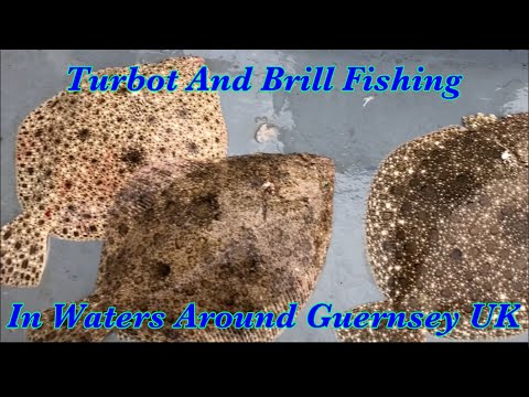 Turbot And Brill Fishing From Boat In UK Waters