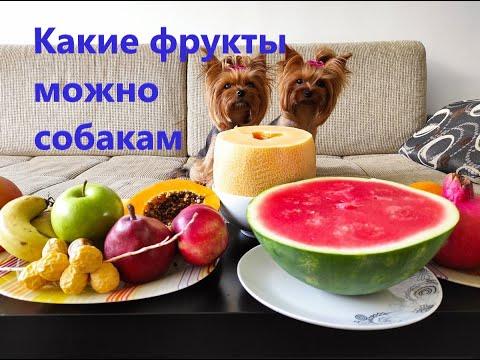 какие фрукты можно собаке