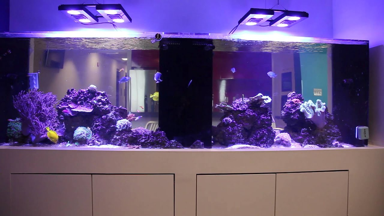 Checkin out Gregs Office Reef Tank YouTube
