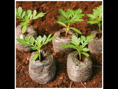 Как посадить рассаду томатов и перцев в торфяные таблетки.