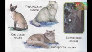 """Окружающий мир 1 класс ч.1, Перспектива, с.76-79, тема урока """"Кошка в нашем доме"""""""