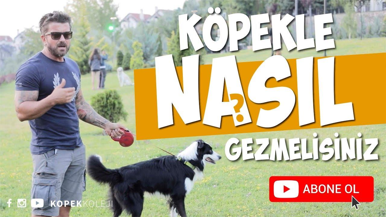 İstanbul'un Köpek Gezdirme Uygulaması DogGO'nun Hikayesi | Cansu Tokuç'la Canlı Yayın
